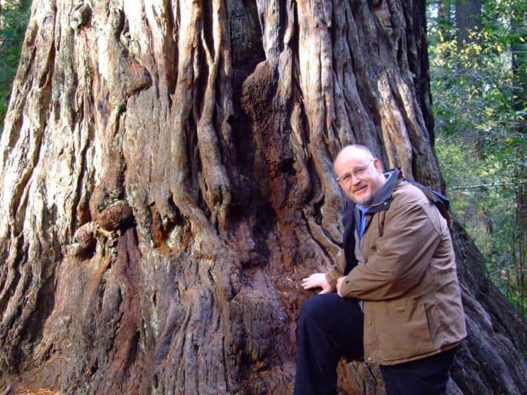 kn-tree-s-1024x768